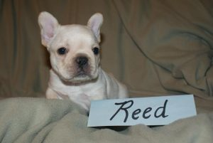 reed4