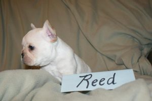 reed5